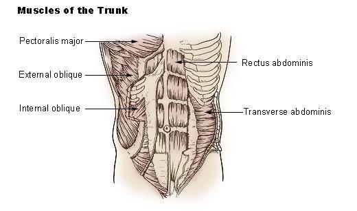 mięśnie brzucha brzuszki