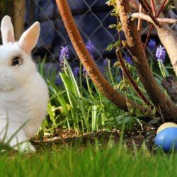 Zajac wielkanocny - BlackBeltRx